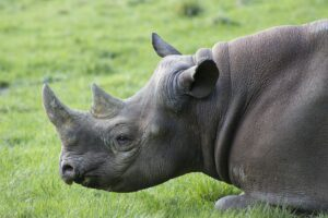 ThreatQuotient Continues Tradition of Celebrating World Rhino Day in 2021