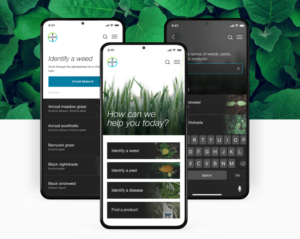 Bayer launches FieldMate agri-tech app for faster decision making